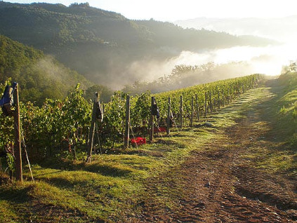 At 300 metres, the grape varieties for the Renzo Masi winery mature and thrive.