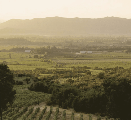 Terra Nobles Rebgärten in Colchagua