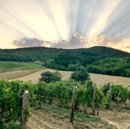 Frescobaldi Weinberg Sonnenuntergang