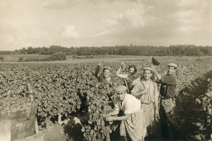 Historical photograph of the harvest