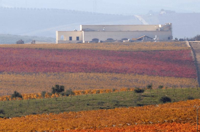 Tormaresca Weinberge im Herbst