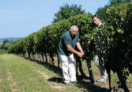 Inspection of the grapes