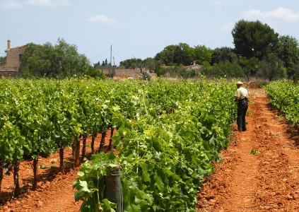 Weingarten Macia Batle