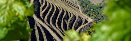 Die Terrassen schlängeln sich um den Weinberg von Quinta do Portal