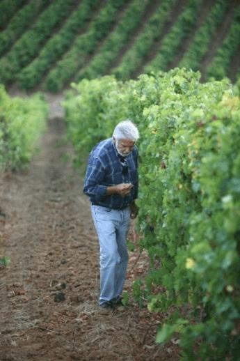 Der Weinmacher José Neiva Correia