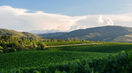 weitläufige Weingärtnen Rothschild