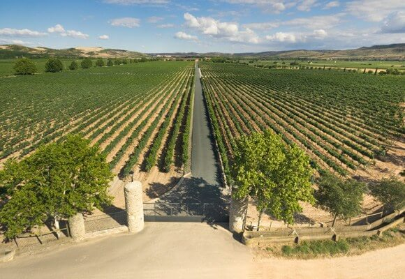 Long rows of vines from Baron de Ley