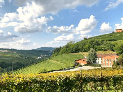 Weingut von Lo Zoccolaio