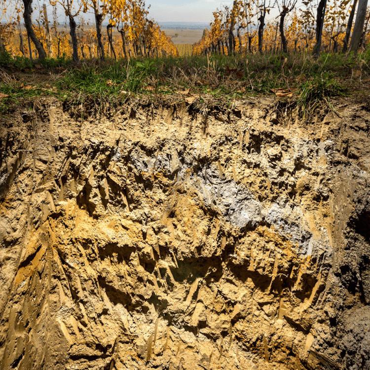 Die Bodenschätze von Esterházy