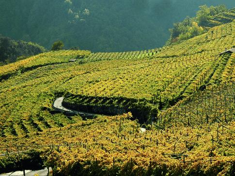 Die Weingärten von Castel Firmian in Trentino