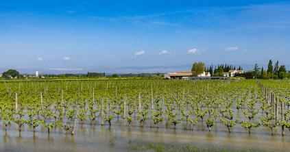 Überflutete Rebflächen bei Domaine de la Ferrandière