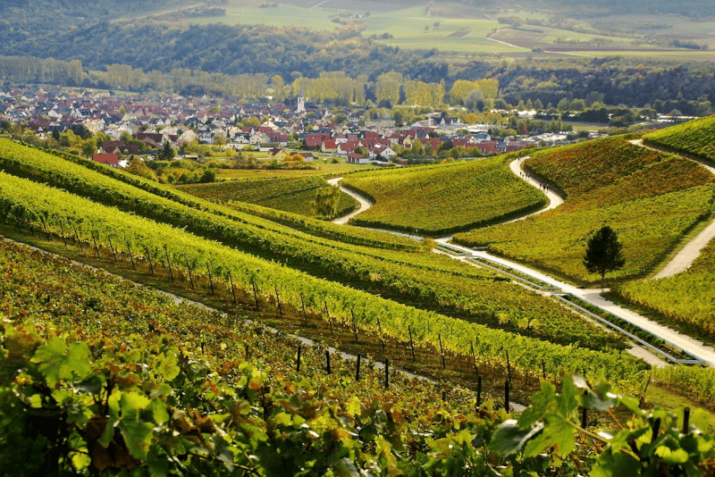 View over the vineyards of the estate