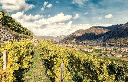 Weinregion von Rudi Pichler