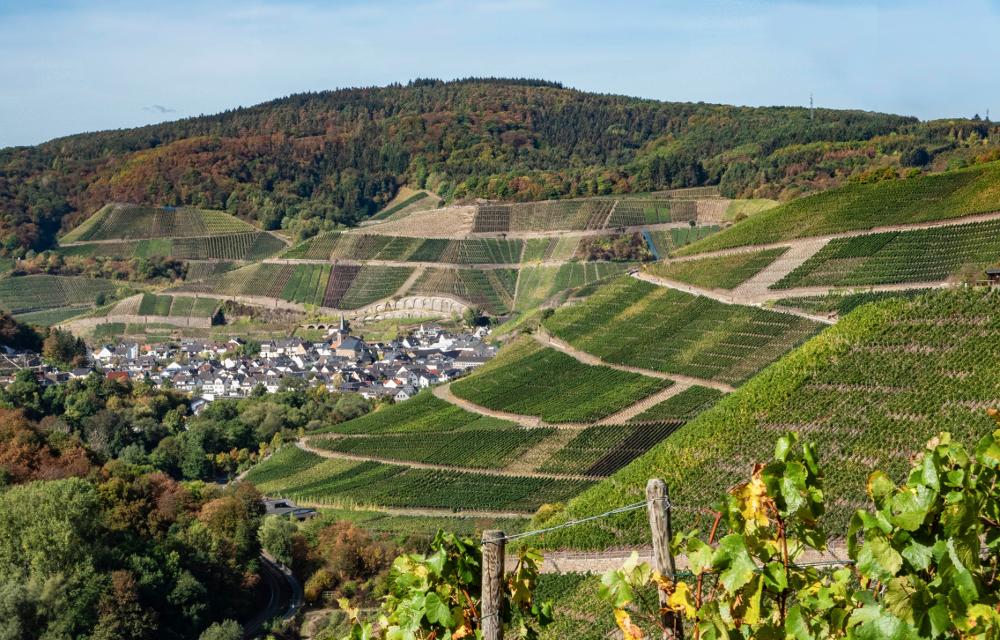 Dernau vineyards on the Ahr
