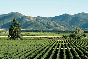 Die Weinberge von Vina Los Vascos