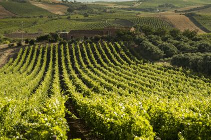 Blick über die Weinberge mit dem Gut im Hintergrund