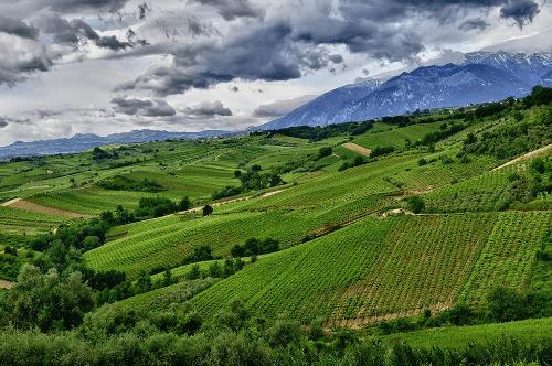 Weinberge in Abruzzen von Tenuta Ulisse
