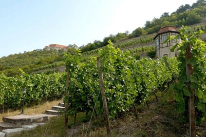 Viticulture at Neuenburg Castle