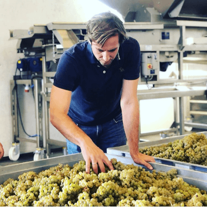 Checking the grapes at Dreissigacker