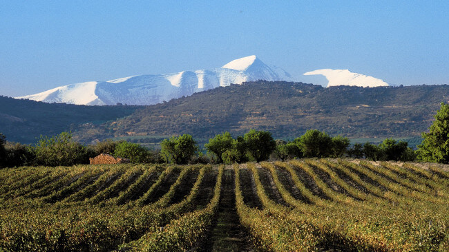 Weinberge von Vinas del Vero