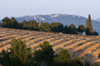 Vineyards for the wines of Francois Arnaud
