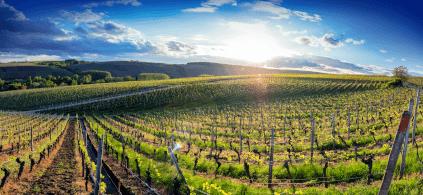 Viticulture in Franconia