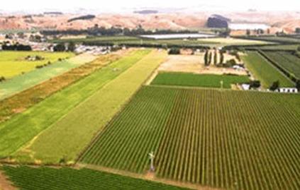 Der Fernhill-Rebgarten in Hawke's Bay