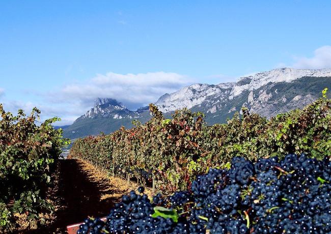 Weinberge von Altos de Rioja