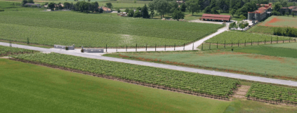 Luftbild der Rebflächen der Villa Chiòpris