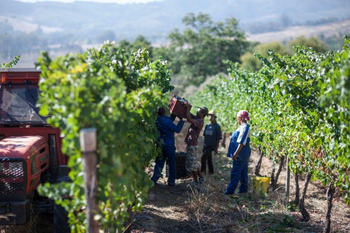 Zwalu wine Meyer-Näkel South Africa