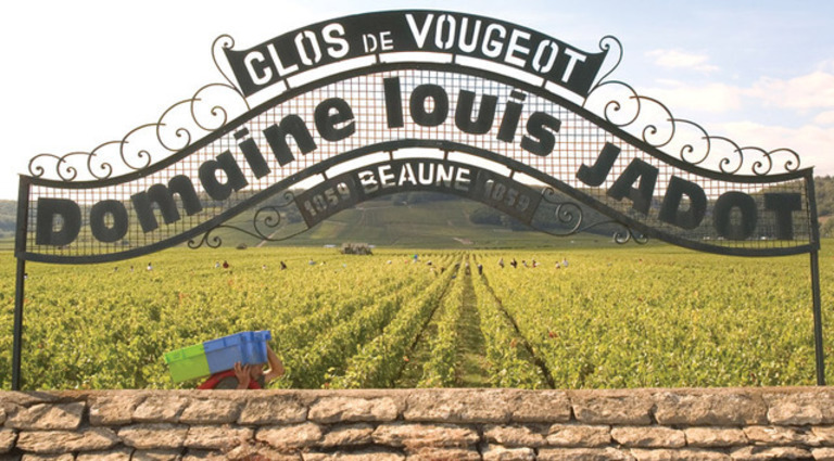 Louis Jadot Clos Vougeot