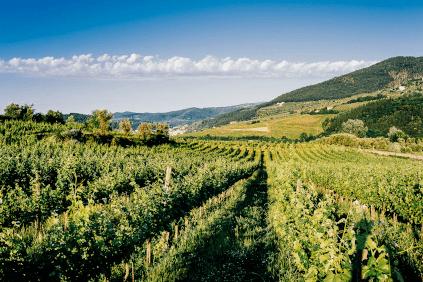 Selvapiana Weingarten