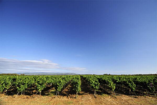 Blick über die Weingärten