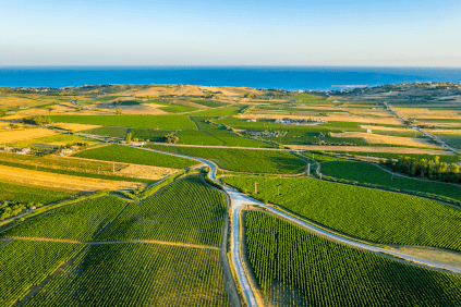 View over vineyards on the Sicilian coast